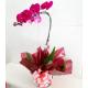 Orquídea Phalaenopsis Roxa