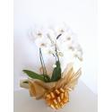 Orquídea Branca C/2 galhos