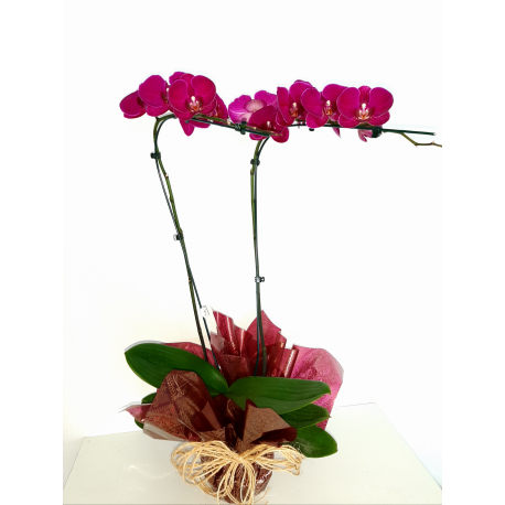 Orquídea Lilás C/2 galhos